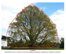 Un modèle           mathématique pour la pousse des arbres